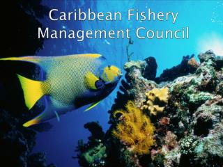 Caribbean Fishery Management Council