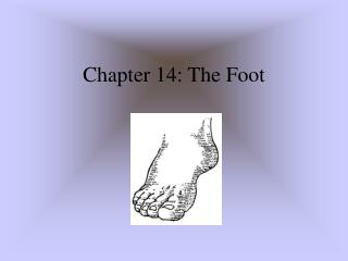Chapter 14: The Foot