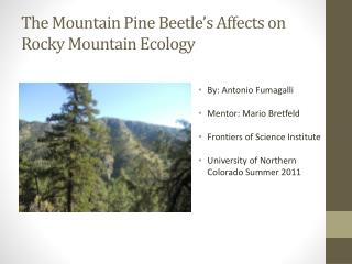 The Mountain Pine Beetle's Affects on Rocky Mountain Ecology
