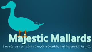 Majestic Mallards