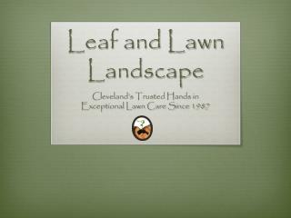 Leaf and Lawn Landscape