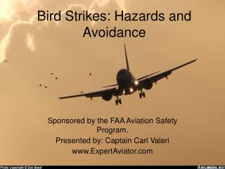 Bird Strikes: Hazards and Avoidance