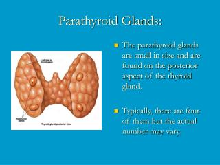 Parathyroid Glands: