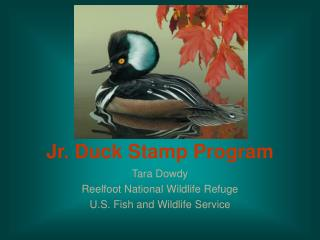 Jr. Duck Stamp Program