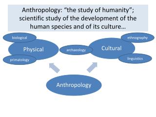 "Anthropology: ""the study of humanity""; scientific study of the development of the human species and of its culture…"
