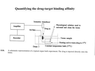 Quantifying the drug-target binding affinity