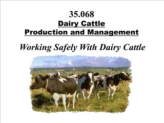 35.068  dairy cattle  production and management