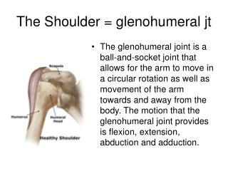 The Shoulder = glenohumeral jt