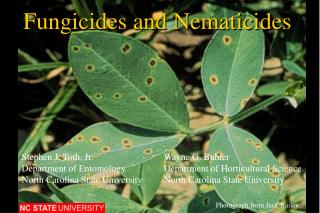 Fungicides and Nematicides