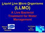 Liquid Live Micro Organisms LLMO