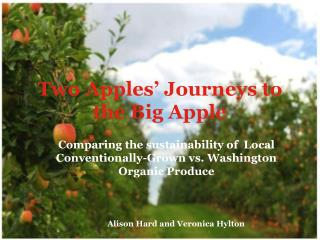 Two Apples' Journeys to the Big Apple