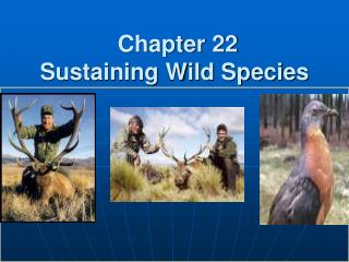 Chapter 22 Sustaining Wild Species