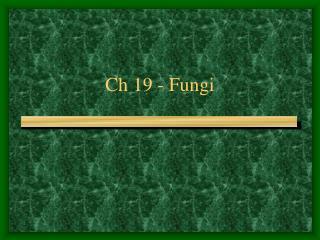 Ch 19 - Fungi