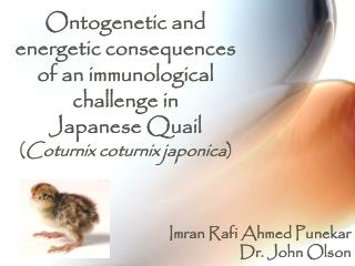 Ontogenetic and energetic consequences of an immunological challenge in  Japanese Quail  ( Coturnix coturnix japonica )