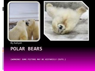 Polar  bears (WORNING! SOME PICTORS MAY BE HISTARICLY CEUTE.)