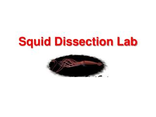 Squid Dissection Lab