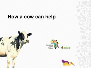 How a cow can help