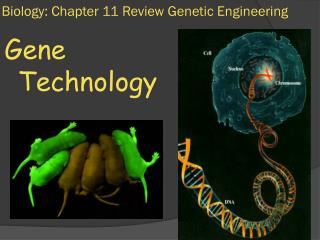 Biology: Chapter 11 Review Genetic Engineering