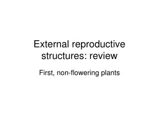 External reproductive structures: review