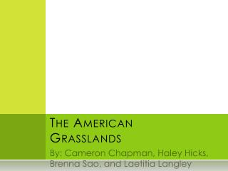 The American Grasslands