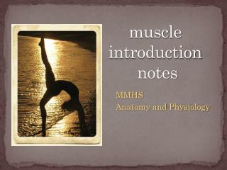 muscle  introduction  notes