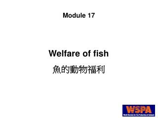 Welfare of fish 魚的動物福利