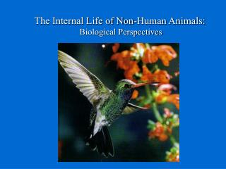 The Internal Life of Non-Human Animals: Biological Perspectives