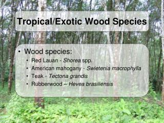 Tropical/Exotic Wood Species