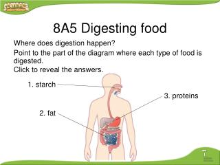 Where does digestion happen? Point to the part of the diagram where each type of food is digested. Click to reveal the