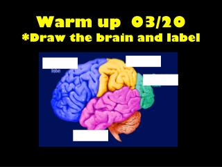 Warm up  03/20 *Draw the brain and label