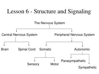 Lesson 6 - Structure and Signaling