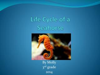 Life Cycle of a Seahorse