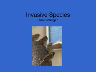 Invasive Species Grant Mulligan