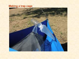 Making a trap cage