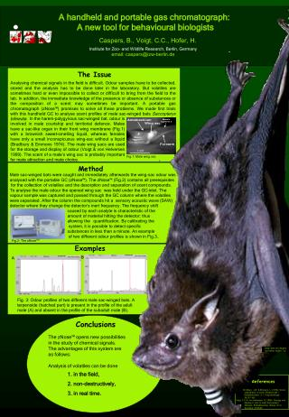 Male sac-winged bats were caught and immediately afterwards the wing-sac odour was