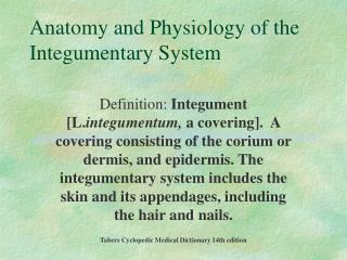 Anatomy and Physiology of the Integumentary System