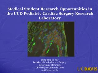 Medical Student Research Opportunities in the UCD Pediatric Cardiac Surgery Research Laboratory