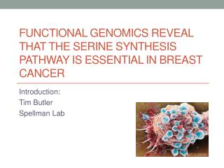 Functional genomics reveal that the serine synthesis pathway is essential in breast cancer