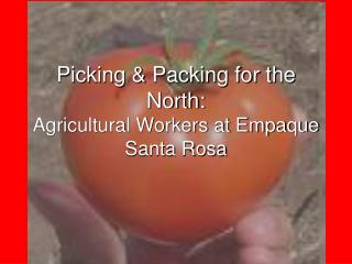 Picking & Packing for the North: Agricultural Workers at Empaque Santa Rosa
