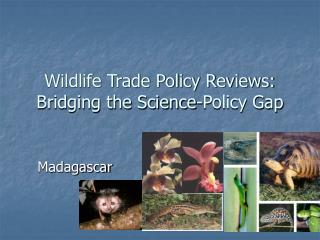 Wildlife Trade Policy Reviews: Bridging the Science-Policy Gap