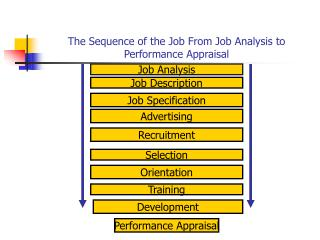 The Sequence of the Job From Job Analysis to Performance Appraisal