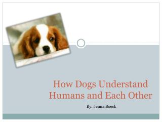 How Dogs Understand Humans and Each Other