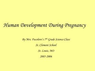 Human Development During Pregnancy