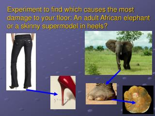 Experiment to find which causes the most damage to your floor: An adult African elephant or a skinny supermodel in heels