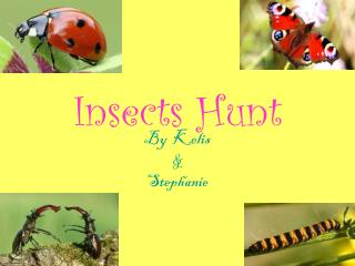 Insects Hunt