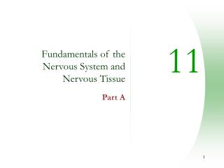 Fundamentals of the Nervous System and Nervous Tissue Part A