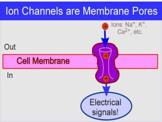 Ion Channels defined
