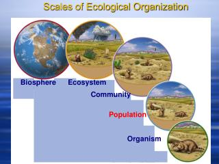 Scales of Ecological Organization