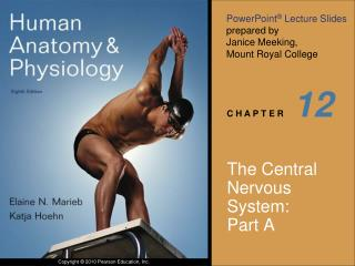 The Central Nervous System:  Part A