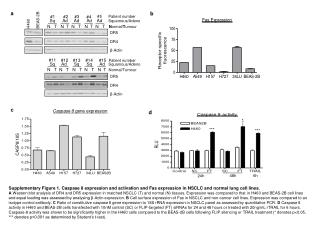 Supplementary Figure 1. Caspase 8 expression and activation and Fas expression in NSCLC and normal lung cell lines.